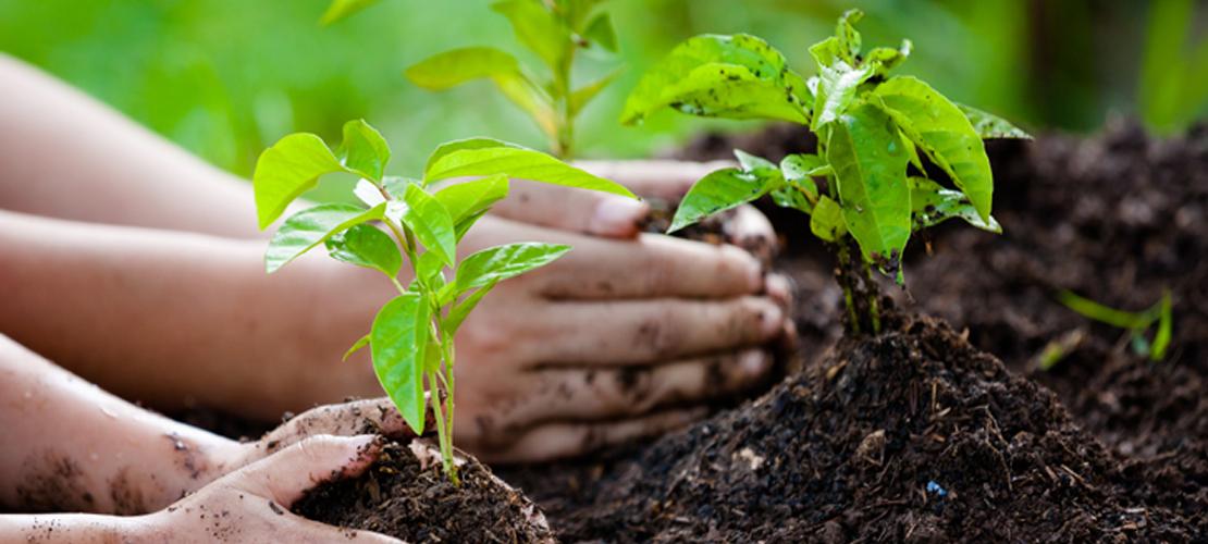 Le Bistrot | Atelier compost (enfants)